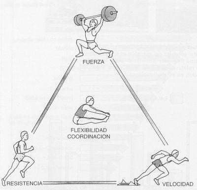 cualidades fisicas